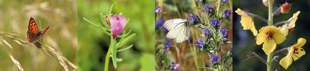 Images Loiret Nature Environnement - MN de Bellefroid & N Déjean